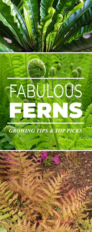 Fabulous Ferns - types of ferns