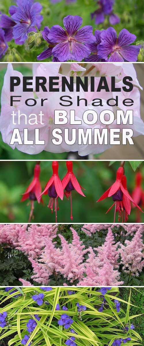 Perennials For Shade That Bloom All Summer The Garden Glove