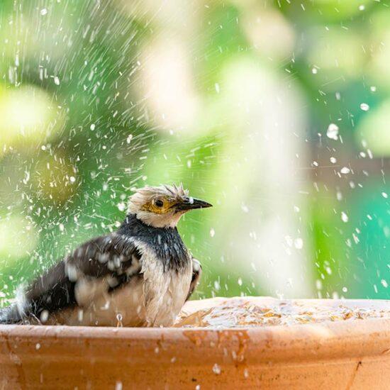 9 Adorable & Unique DIY Bird Bath Ideas