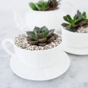 DIY Teacup Gardens and Planters