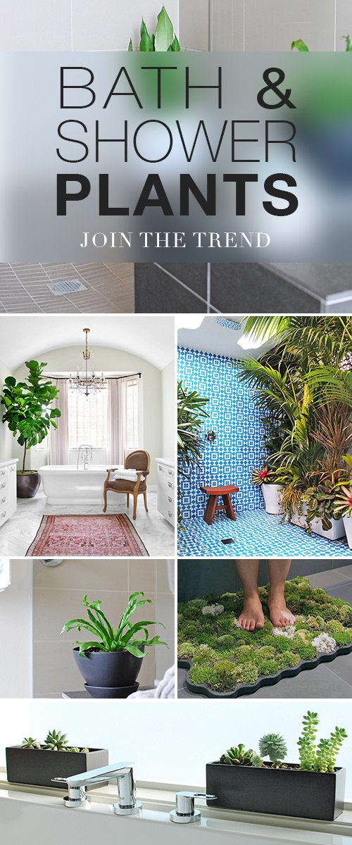 Bath & Shower Plants - How to Join The Trend