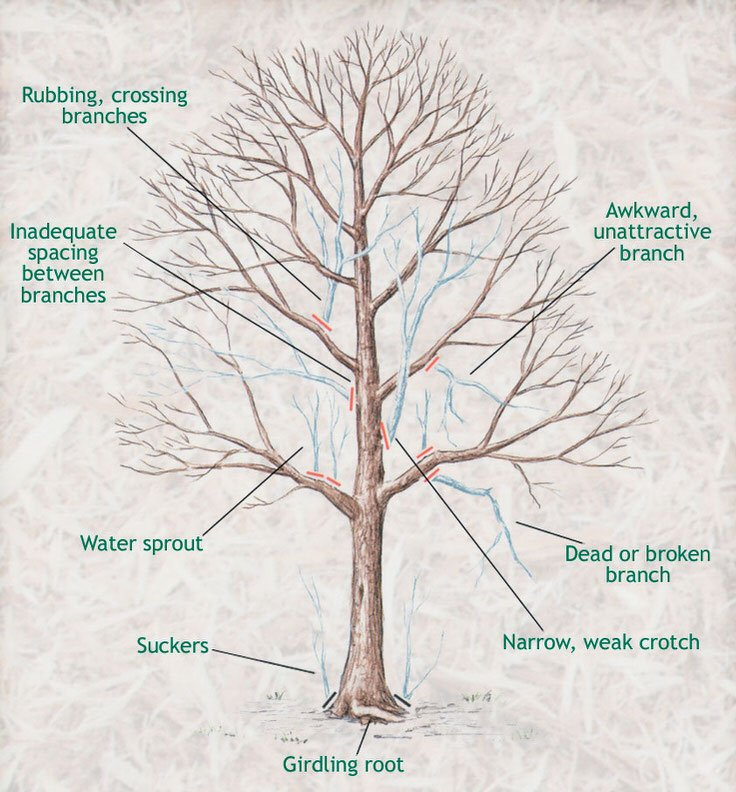 How To Prune Trees When The Garden Glove