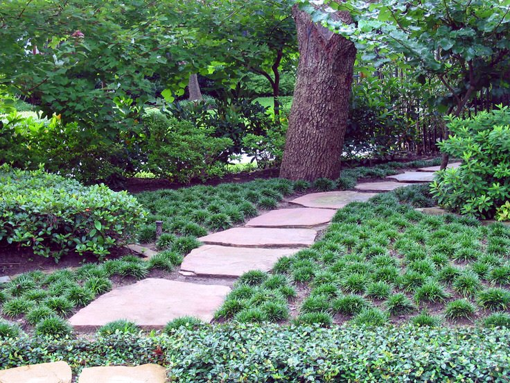 It is also drought resistant once established. It grows in this clump like  form and never requires mowing. Simple, but extremely effective lawn  replacement! - Alternatives To Grass : Front Yard Landscaping Ideas The Garden Glove