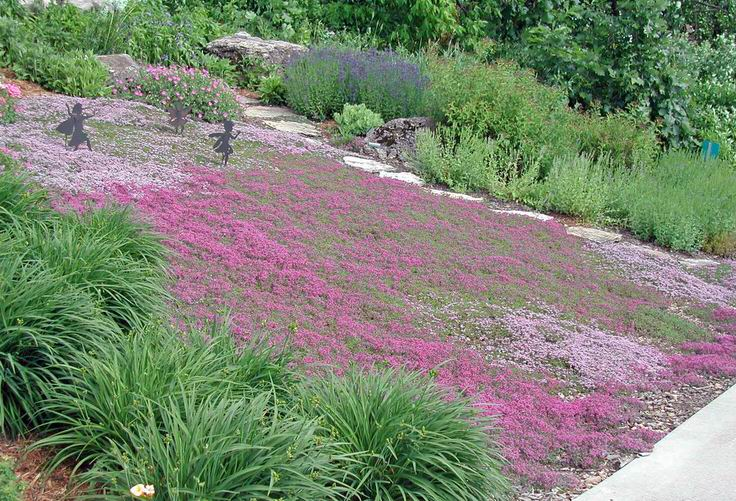 Alternatives to Grass : Front Yard Landscaping Ideas • The ...