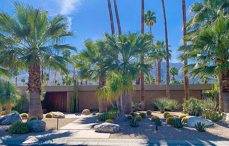 Desert Garden and Landscape Ideas