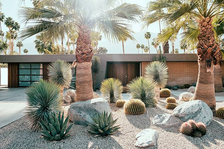 Lawn alternative - desert landscaping