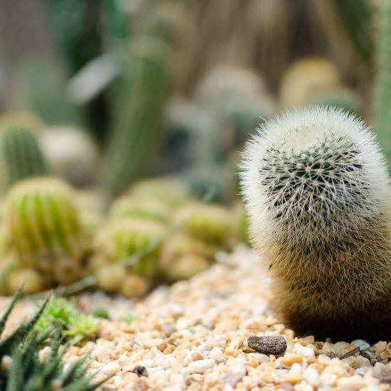Grow a Cactus Garden