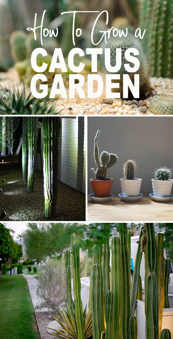 Grow a Cactus Garden - Featuring Our Moorten Botanical Garden Visit
