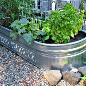 12 Brilliant Container Vegetable Gardening Ideas
