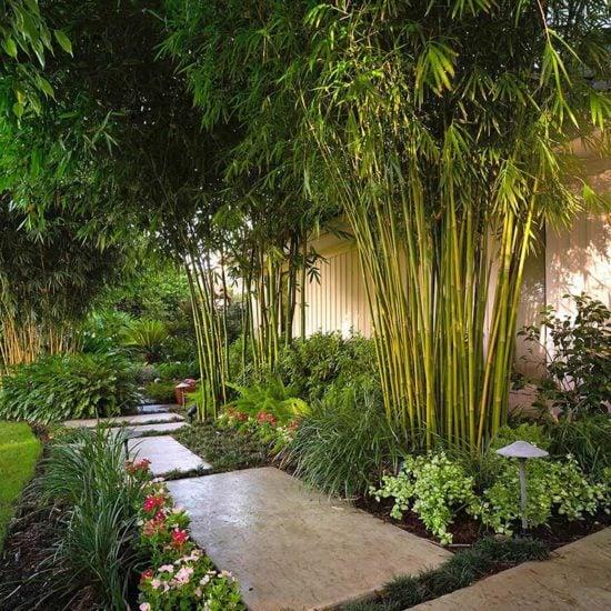 Modernize Your Garden - How to Grow Bamboo