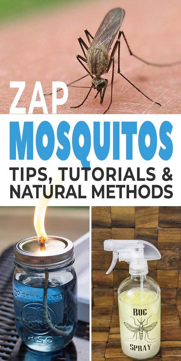 Zap Those Mosquitos! How to Repel Mosquitos