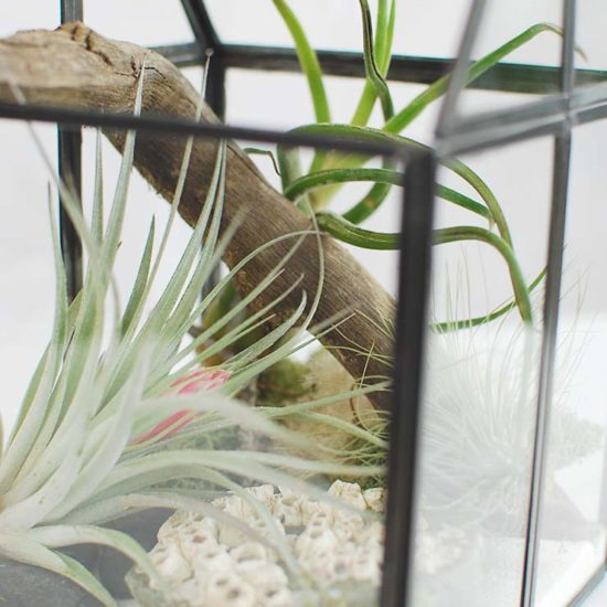 How to Make an Air Plant Terrarium to Display Your Plant Pets