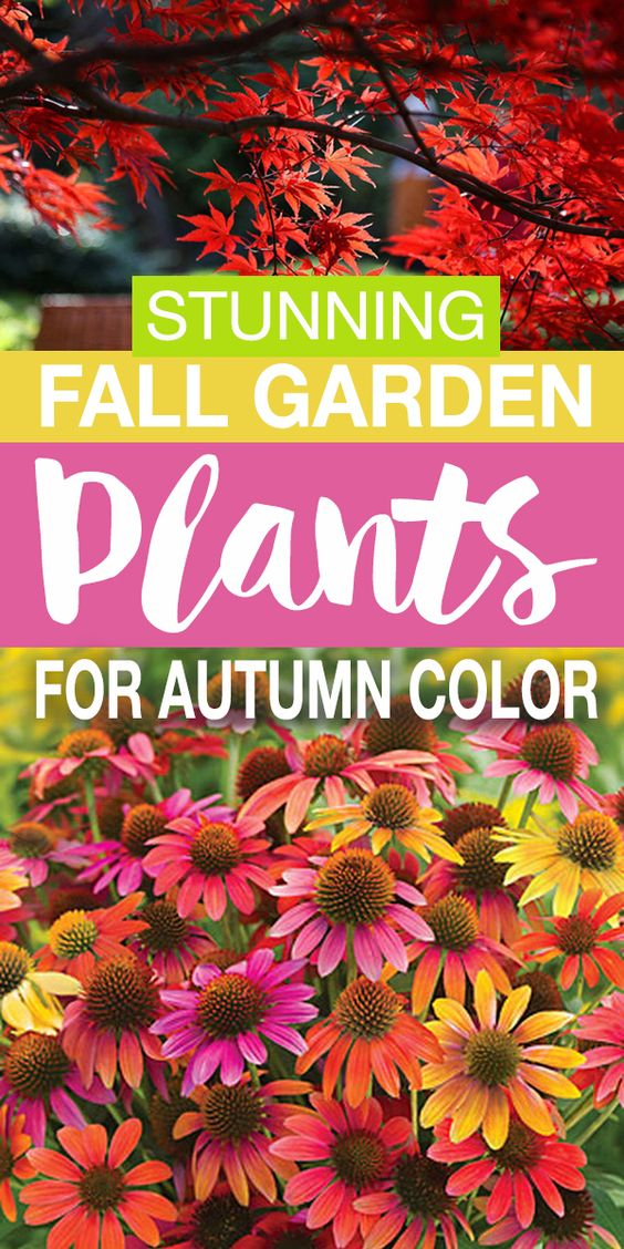 Fall Garden Plants