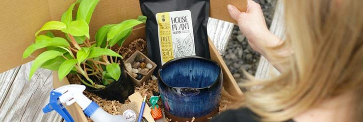 10 Must Have Plant Subscription Boxes