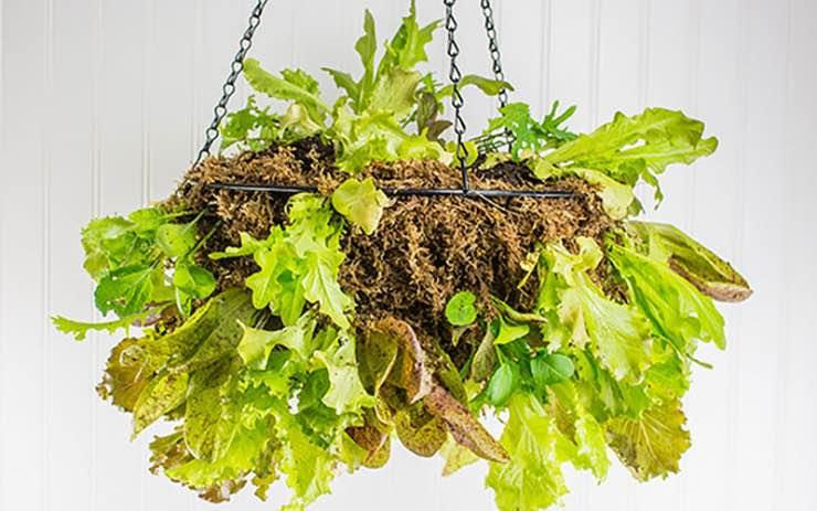 howto build a vertical vegetable garden